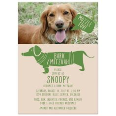 Planning to throw your dog a Bark Mitzvah party? Then you might just love this green hipster Muzzle Tov Bark Mitzvah invitation. It has a photo template for a photo of your Bark Mitzvah dog and the wording can be personalized however you'd like. The designer can even change up the colors to match the photo you provide. Note, your dog's photo should fit easily into a landscape orientation for this to work well (a dog lying down is best). This funny hipster Bark Mitzvah party invitation has a cute Fun Party Themes, Birthday Party Themes, Engagement Party Themes, Whimsical Fonts, Hipster Dog, Hebrew Words, Coming Of Age, Wedding Paper, Dog Photos