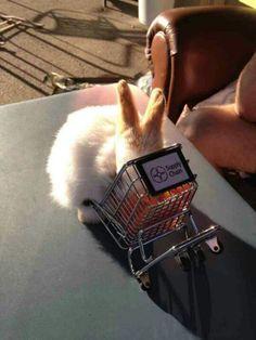 Hungwy wabbit!