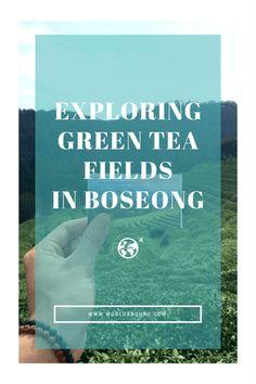 Exploring Green Tea Fields in Boseong • World Abound