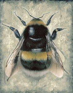 Bumble Bee by Brian Taylor (Candykiller) Humble Bee, I Love Bees, Bees And Wasps, Bee Jewelry, Bee Art, Bee Happy, Bees Knees, Queen Bees, Bee Keeping