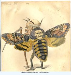 """Moth-Charles Briton 1873. Costume design from Mistick Krewe of Comus' 1873 """"Missing Links"""" parade. Watercolor on paper."""
