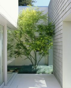 Garden: Small Courtyard Modern Single House Design With White Interior Color Decorating Ideas Plus Tree And Plants