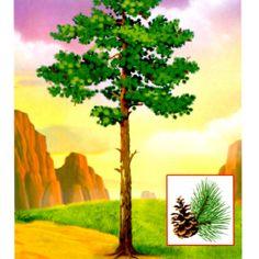 10 Autumn Nature, Elementary Science, Garden Trees, Nature Crafts, Autumn Theme, Ancient Greek, Card Games, Clip Art, Seasons
