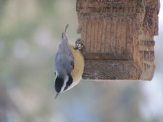 Nuthatch takes a different perspective.