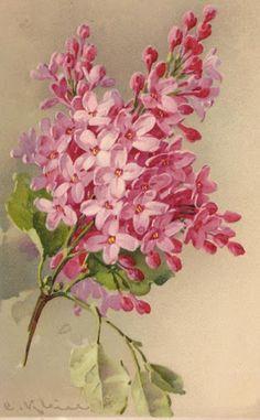 СИРЕНЬ Lilac Painting by Catherine Klein on Etsy ♥ Art Vintage, Decoupage Vintage, Vintage Art Prints, Vintage Images, Art Floral, Catherine Klein, Impressions Botaniques, Flower Pictures, Botanical Prints