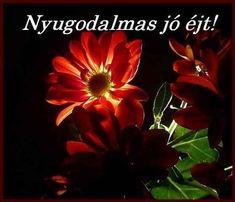 Minden napi jó kivánság - tajcsi.qwqw.hu Happy Thanksgiving, Good Morning, Album, Humor, Plants, Erika, Happy Thanksgiving Day, Buen Dia, Bonjour