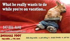 Snaggle Foot Dog Walks and Pet Care - Round Lake, IL: 3 Health Reasons Why Pets Do Better at Home Than a...