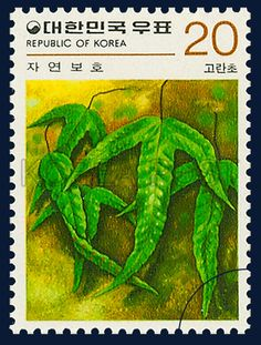 Postage Stamps in the Nature Conservation Series, Crypsinus hastatus (Thunb.) Copel, Plants, DarkGreen, 1979 11 25, 자연보호 시리즈(제4집), 1979년 11월 25일, 1154, 고란초, postage 우표