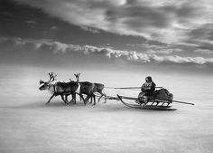 "Salgado/Genesis - ""Terres du Nord"" - The larger sledges are driven by the women"