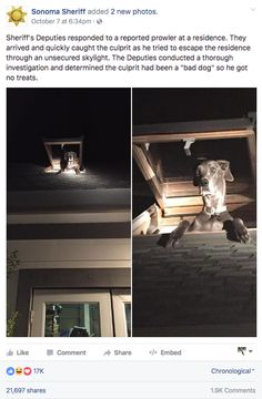 "The Sonoma County Sheriff's Department in California recently responded to a report of a prowler at a residence, only to find the culprit trying to crawl out of a skylight on all four paws. | Home Prowler Turns Out To Be ""Bad Dog"" Caught By Police - BuzzFeed News"