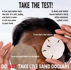 Visit the Tybee Island Marine Science Center to learn tips like this and more, free this (Super Museum) Sunday February 10, 2013!