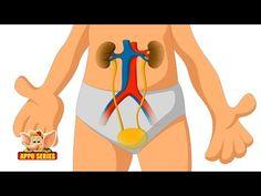 Learn Human Body - Skeleton System - YouTube