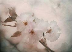 """""""Dawn"""" --- Poster 100 x 70 cm - """"Morgendämmerung"""" von Sarah C. Frerich - auch in anderen Größen und als Leinwandbild erhältlich von POSTERLOUNGE, http://www.amazon.de/dp/B00AGUAT46/ref=cm_sw_r_pi_dp_qo5Zqb16SH774"""