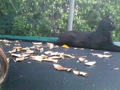 This is my cat a he is laying on the trampoline