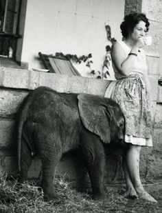 """Dame Daphne Sheldrick on a coffee break with baby elephant yanno. just a baby freaking elephant coming over for a bit of a morning cuddle. as she thinks """"mmmm the best part of waking up, IS folgers in your cup. Beautiful Creatures, Animals Beautiful, Baby Animals, Cute Animals, Wild Animals, Baby Elefant, Elephant Love, Newborn Elephant, Funny Elephant"""