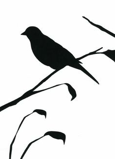 designer-wallpaper-blackbird-white