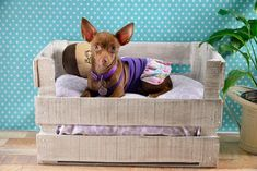 Pet Beds, Dog Bed, Hiding Cat Litter Box, Cat House Diy, Chihuahua Love, Dog Diapers, Diy Stuffed Animals, Baby Dogs, Cat Life