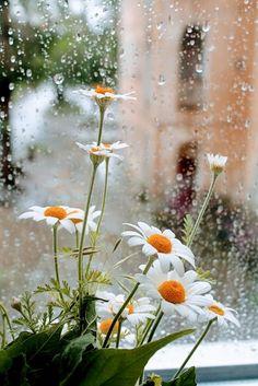 Rainy Days and blooming sunshine ❤️ Rainy Day Photography, Rain Photography, White Photography, Flowers Nature, Wild Flowers, Beautiful Flowers, Beautiful Places, Landscape Wallpaper, Nature Wallpaper