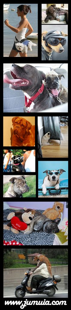 Dog Training - How to train your dog in advanced methods. by Leonie L.