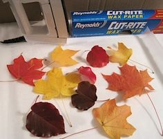 preserve-fall-leaves Ironing the leaves between sheets of waxed paper.  Ironing the leaves promptly after picking them really helps them retain a lot of their color.