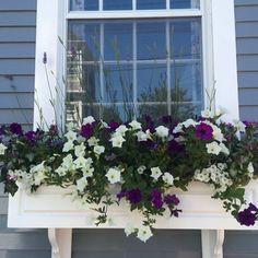 I  Nantucket flower boxes #nantucket #windowboxes #flowerboxes