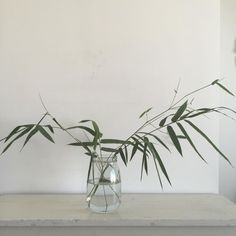 Simple plants - stunning styling result.