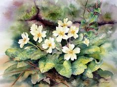 Read all of the posts by Ann on Ann Mortimer Art Watercolor Plants, Watercolor And Ink, Watercolor Art Lessons, Watercolor Paintings, Watercolours, Parts Of A Flower, Collages, Primroses, Silk Painting
