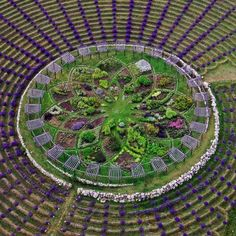 The Beautiful Lavender Labyrinth At Cherry Point Farm U0026 Market, Shelby, MI.  LabyrinthsSacred GeometryMazeGarden DesignLandscape ...