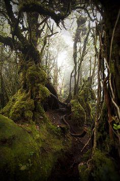 Hoh Rainforest on the Olympic Peninsula, Washington State.