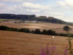 Corn field`s in the Dearne Valley 1998