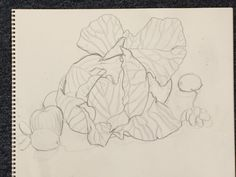 Still life w/cabbage line contour drawing by Wynne