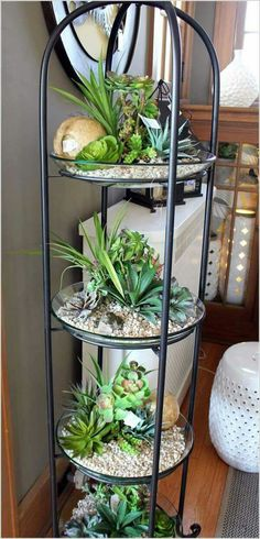 indoor garden projects 7 Top 24 Awesome Ideas to Display Your Indoor Mini Garden Cacti And Succulents, Planting Succulents, Planting Flowers, Cactus Plants, Small Cactus, Green Plants, Small Plants, Potted Plants, Inside Plants