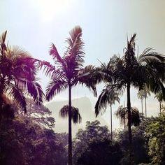 Photos at Jardim Botânico - Lagoa - Rio de Janeiro, RJ