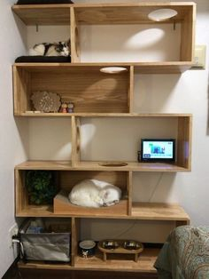 Cat Tree House, Cat House Diy, Cat Wall Furniture, Cat Wall Shelves, Diy Cat Tree, Living With Cats, Cat Towers, Cat Playground, Animal Room