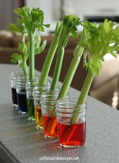 I love easy experiments that make science cool! This rainbow colored celery science experiment is simple to set up and really makes transpiration come alive for kids. for kids Celery Science Experiment for Kids Teaching Science, Science For Kids, Science Activities, Summer Science, Science Fun, Easy Science Fair Projects, Science Centers, Earth Science, Science Chemistry