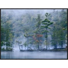 Global Gallery Emerald Lake in Fog, Emerald Lake State Park, Vermont by Tim Fitzharris Framed Photographic Print on Canvas Size: