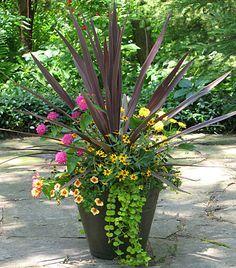 Red cordyline, pink & yellow zinnias,  creeping zinnia, creeping jenny, million bells