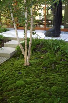An interesting lush mossy garden- and interesting use of timber to stone in stair detail.