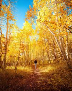 Golden Tree, Morning Light, Aspen, Wanderlust, Country Roads, Vacation, Adventure, Photo And Video, Landscape