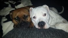 My millie and logan