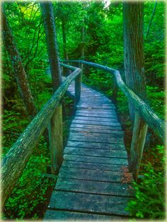 Visit The Ridges Sanctuary and hike their many trails, Baileys Harbor