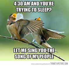 yeah outside my bedroom every damn morning!
