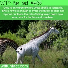 WTF Fun Facts is updated daily with interesting & funny random facts. We post about health, celebs/people, places, animals, history information and much more. New facts all day - every day! Wow Facts, Wtf Fun Facts, Funny Facts, Random Facts, Crazy Facts, Random Stuff, Weird History Facts, Strange Facts, Funny Memes