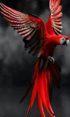 red parrot,,,color splash,,,this would make a cool logo if it was a silhouette.