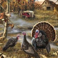 Fall Turkey Ranch by Dona Gelsinger Happy Thanksgiving Turkey, Thanksgiving Pictures, Vintage Thanksgiving, Turkey Painting, Turkey Art, Wild Turkey, Turkey Pics, Wildlife Paintings, Wildlife Art