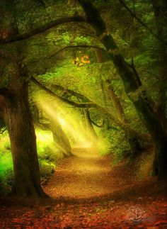 The Woods | Flickr - Photo Sharing!