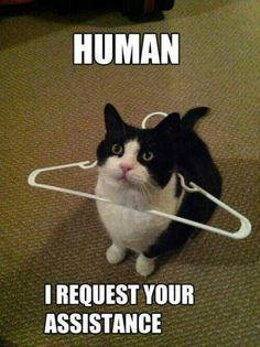猫 (;*△*;)