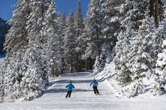 Many of the ski resorts around Lake Tahoe has one-of-a-kind features and unique events. Here's what separates Reno Tahoe ski destinations from others. Tahoe Ski Resorts, Snow Activities, Reno Tahoe, Ski And Snowboard, Lake Tahoe, Separate, Skiing, Popular, Unique