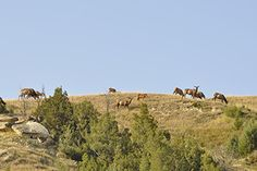 Fall prep: Getting in shape for hunting big country - by Tony Peterson