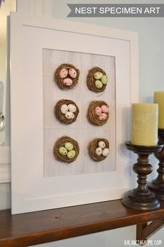 #Spring #Mantle with Nest Specimen Art Perfect for spring or Easter!